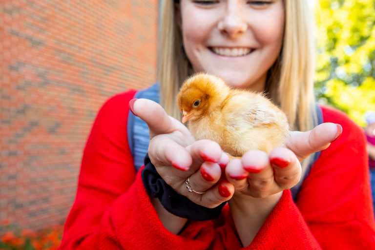 An agriculture student holding a chick